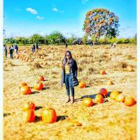 Pumpkin Picking in New York!!