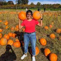 October is for Pumpkin Picking !